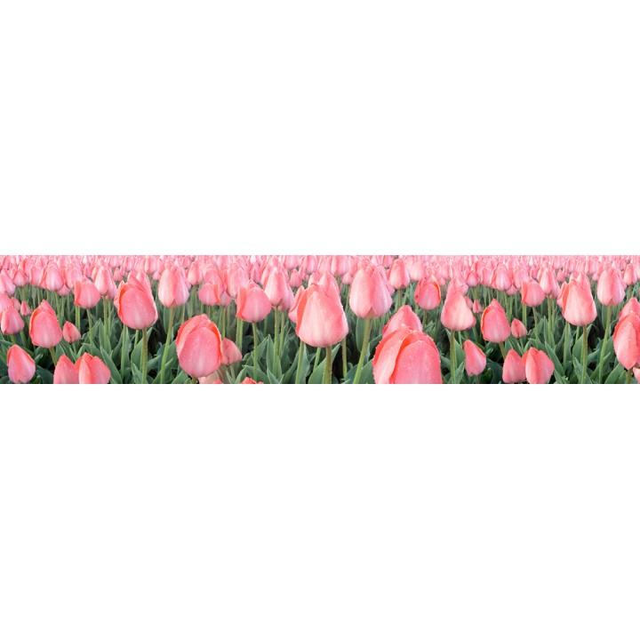 Кухонный фартук Тюльпаны розовые