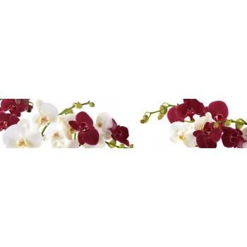 Кухонный фартук Орхидеи на белом