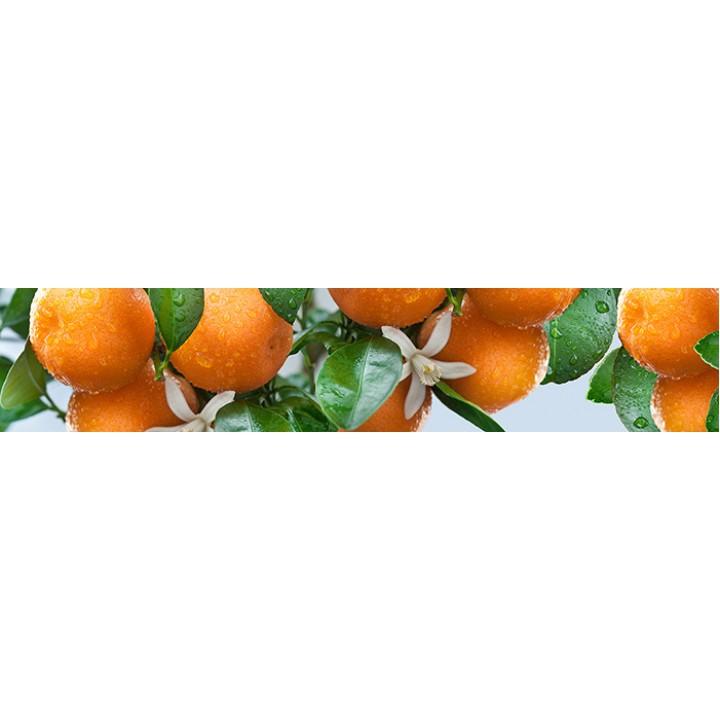 Кухонный фартук Спелые мандарины